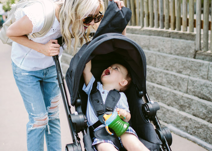 Benji's First Zoo Adventure